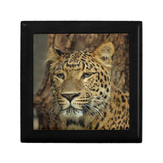 Panther Stalking Gift Box