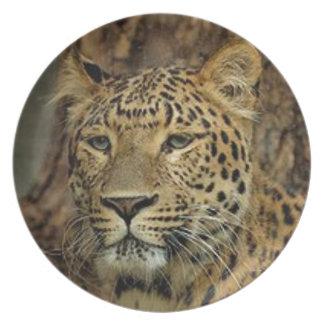 Panther Stalking Plate