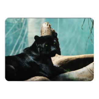 Panther with Piercing Eyes Card
