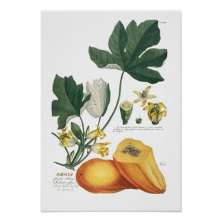 Papaya Print