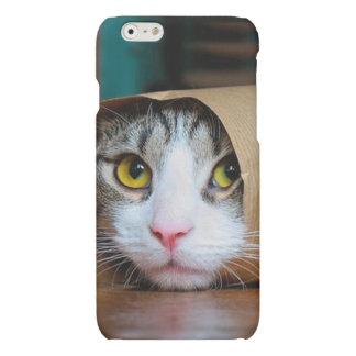 Paper cat - funny cats - cat meme - crazy cat