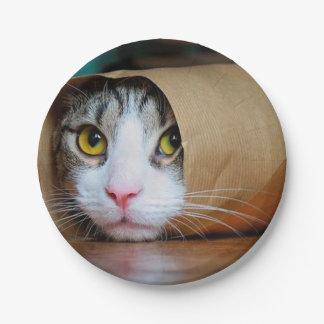 Paper cat - funny cats - cat meme - crazy cat 7 inch paper plate