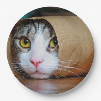 Paper cat - funny cats - cat meme - crazy cat 9 inch paper plate