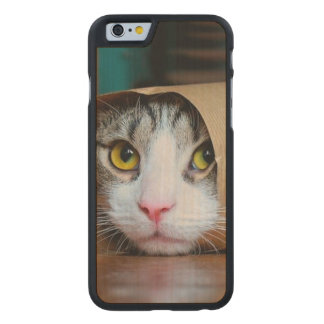 Paper cat - funny cats - cat meme - crazy cat carved maple iPhone 6 case