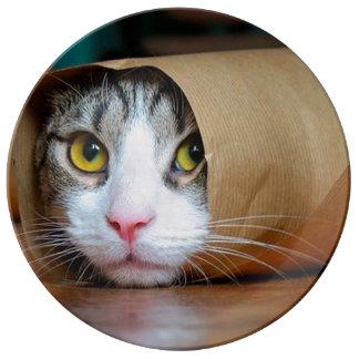 Paper cat - funny cats - cat meme - crazy cat porcelain plates