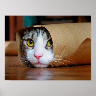 Paper cat - funny cats - cat meme - crazy cat poster