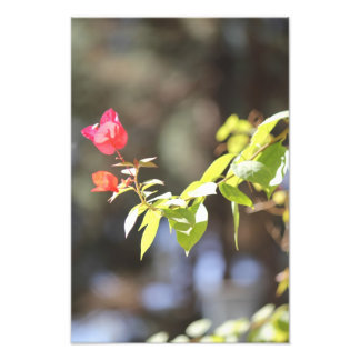 Paper Flower Art Photo