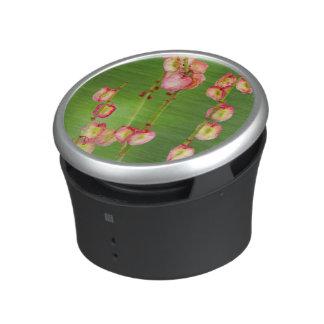 Paper Hearts (Rumex Woodii), Ukhahlamba Bluetooth Speaker