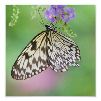 Paper kite in green and purple poster
