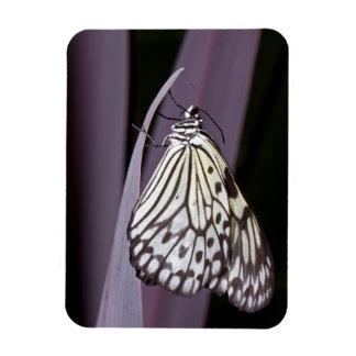 Paper Kite on purple Agave leaf Rectangular Photo Magnet
