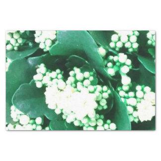 paper muslin green