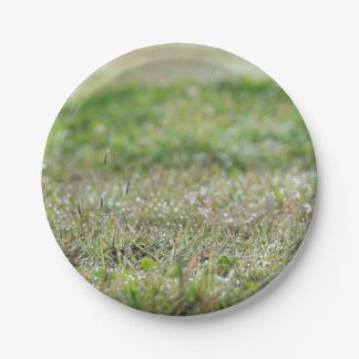 Paper plate Bleaches on grass