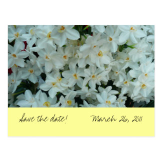 "Paperwhite Narcissus ""Save the Date"" Postcard"