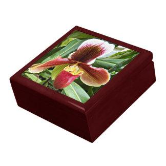 Paphiopedilum Orchid Floral Gift Box