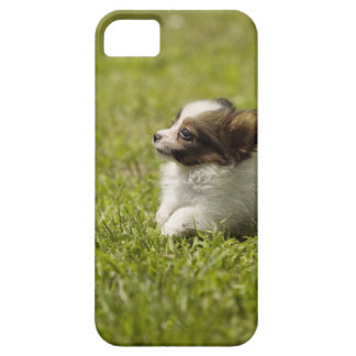 Papillon 2 iPhone 5 covers
