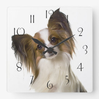 Papillon dog portrait square wall clock