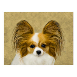 Papillon (Hound Tri Color) Postcard