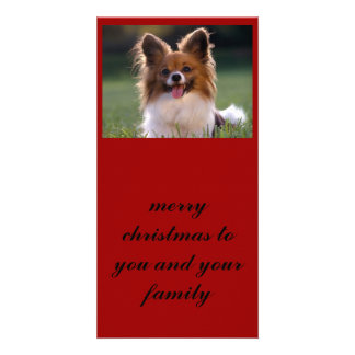 Papillon, merry christmas to you and your family customised photo card