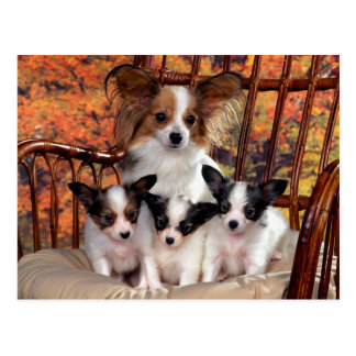 Papillon of puppies with mum postcard