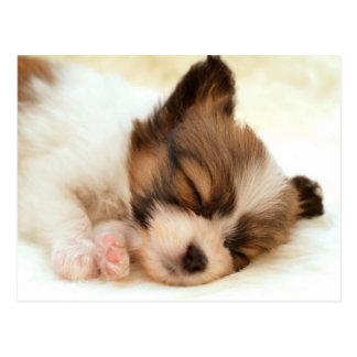 Papillon puppy postcard