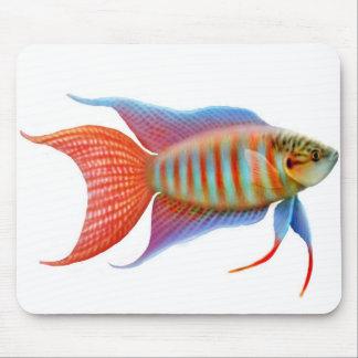 Paradise Gourami Fish Mousepad