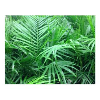 Paradise Palms Postcard