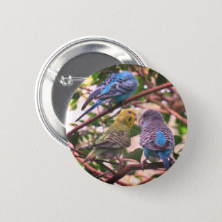 Parakeet 6 Cm Round Badge