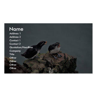Parakeet Auklets on Hall Island Business Card Template
