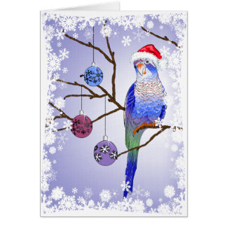 Parakeet Christmas Card