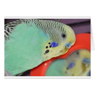 Parakeet looking in mirror card
