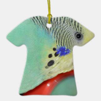 Parakeet looking in mirror ornament
