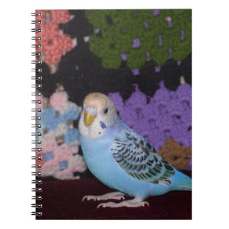 Parakeet Notebook