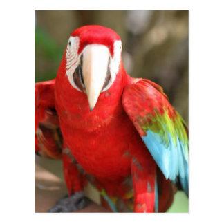 Parakeet Postcard