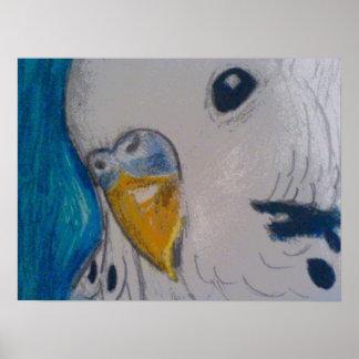 Parakeet Posters