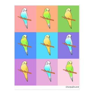 Parakeet Rainbow Rectangles Postcard