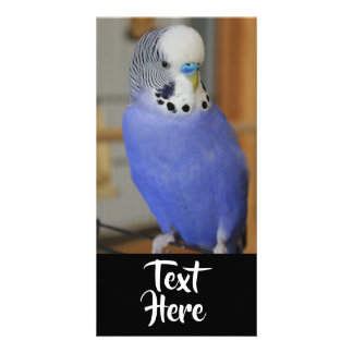 Parakeet Star Photo Card