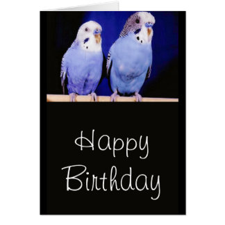 Parakeets (Budgies) Happy Birthday Greeting Card