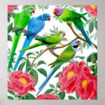 Parakeets & Peonies Print