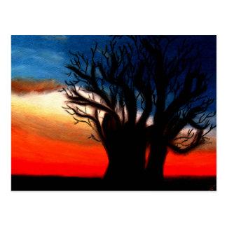 Pari Chumroo Baobob Tree Postcard