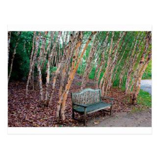 Park Bench 1 Postcard