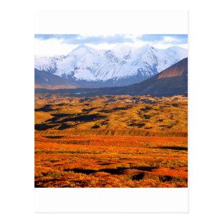Park Denali Alaska Postcard