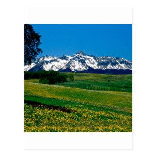 Park Full Bloom San Juan Ains Colorado Postcard
