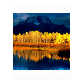 Park Quaking Aspen Moran Grand Tetons Wyoming Postcard
