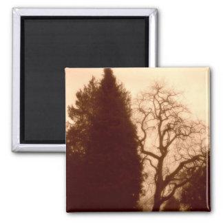 Park Trees Square Magnet