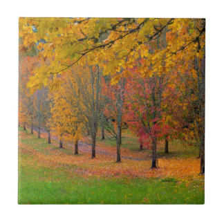 Park with tree lined maple trees in peak fall colo ceramic tile