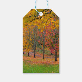 Park with tree lined maple trees in peak fall colo gift tags