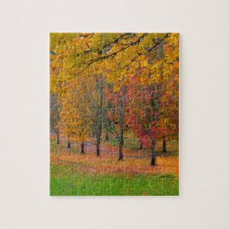 Park with tree lined maple trees in peak fall colo jigsaw puzzle