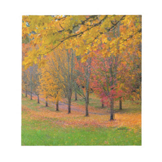 Park with tree lined maple trees in peak fall colo notepad