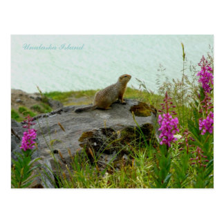Parkee Squirrel by the Water, Unalaska Island Postcard