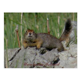 Parkee Squirrel on a Rock, Unalaska Island Postcard